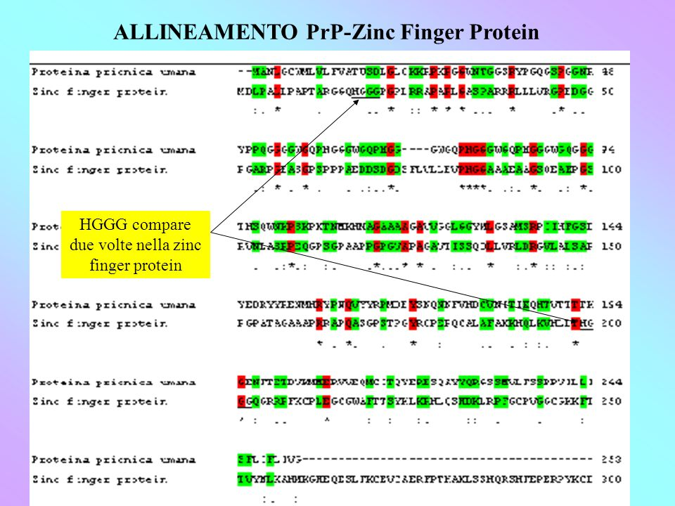 ALLINEAMENTO PrP-Zinc Finger Protein