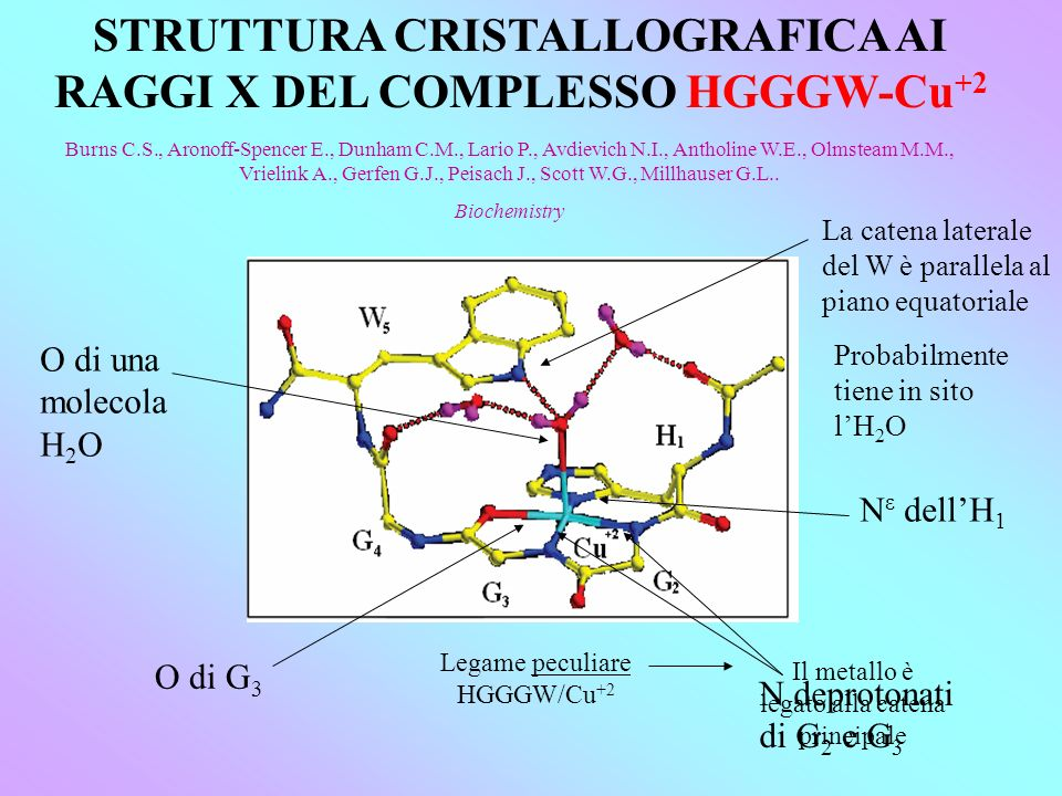 STRUTTURA CRISTALLOGRAFICA AI RAGGI X DEL COMPLESSO HGGGW-Cu+2
