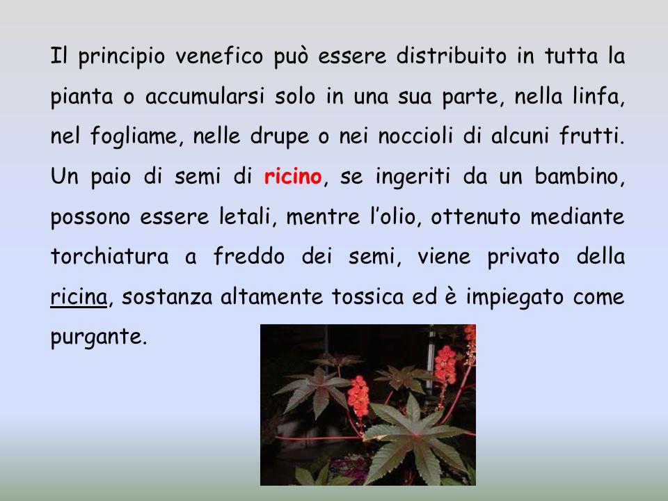 Il principio venefico può essere distribuito in tutta la pianta o accumularsi solo in una sua parte, nella linfa, nel fogliame, nelle drupe o nei noccioli di alcuni frutti.