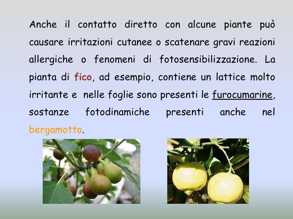 Anche il contatto diretto con alcune piante può causare irritazioni cutanee o scatenare gravi reazioni allergiche o fenomeni di fotosensibilizzazione.