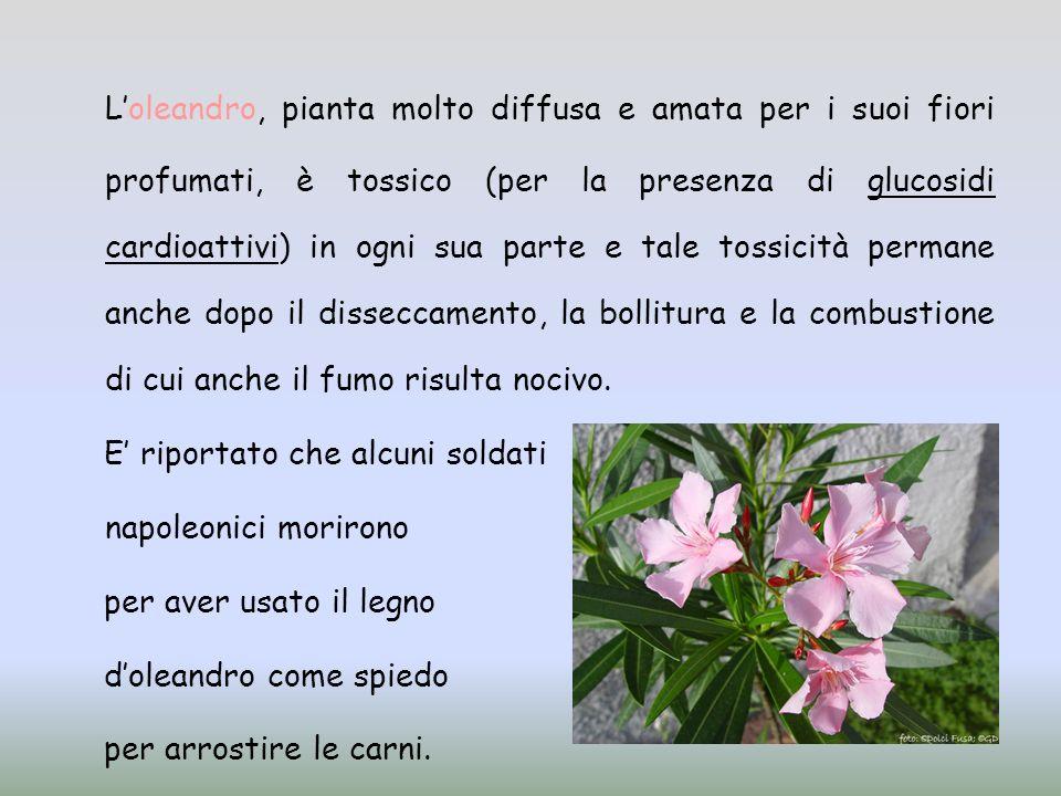 L'oleandro, pianta molto diffusa e amata per i suoi fiori profumati, è tossico (per la presenza di glucosidi cardioattivi) in ogni sua parte e tale tossicità permane anche dopo il disseccamento, la bollitura e la combustione di cui anche il fumo risulta nocivo.