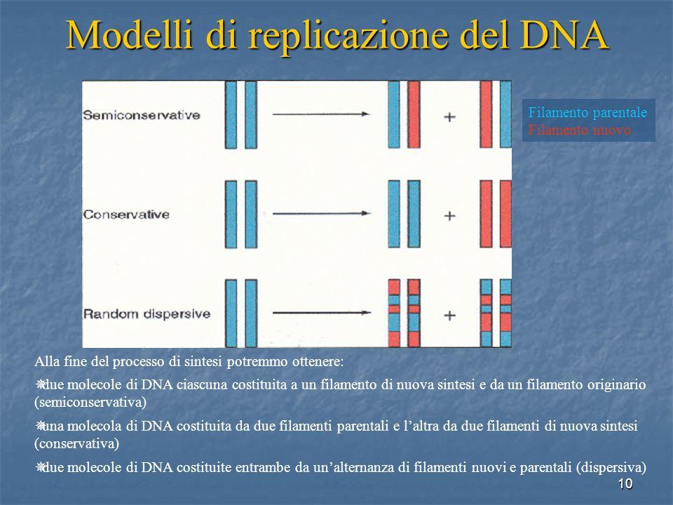 Modelli di replicazione del DNA