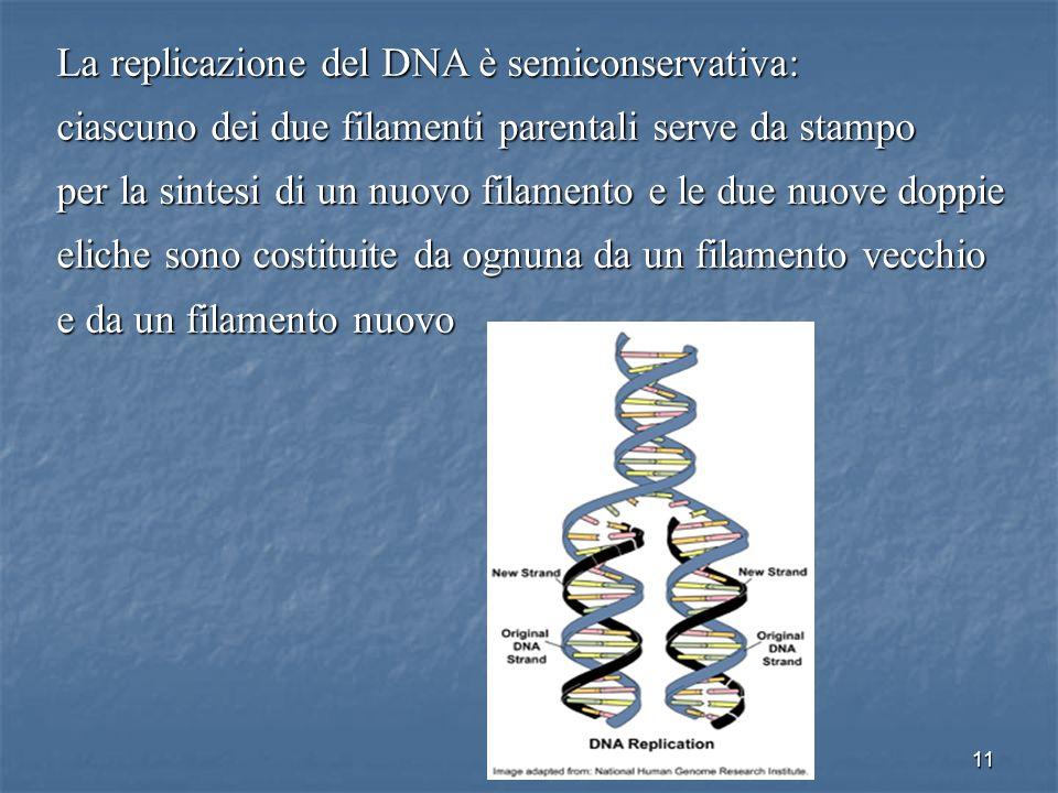 La replicazione del DNA è semiconservativa: