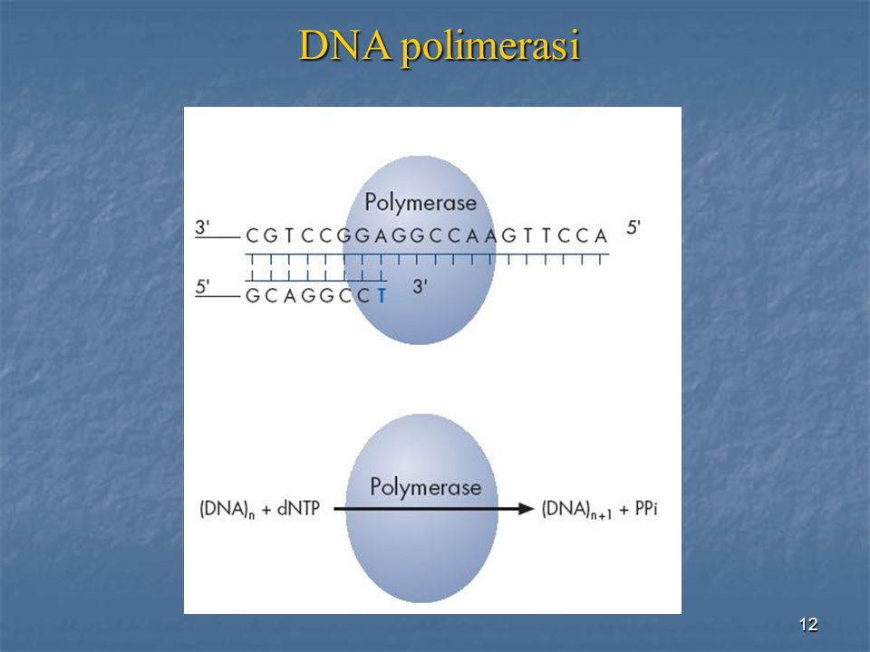 DNA polimerasi