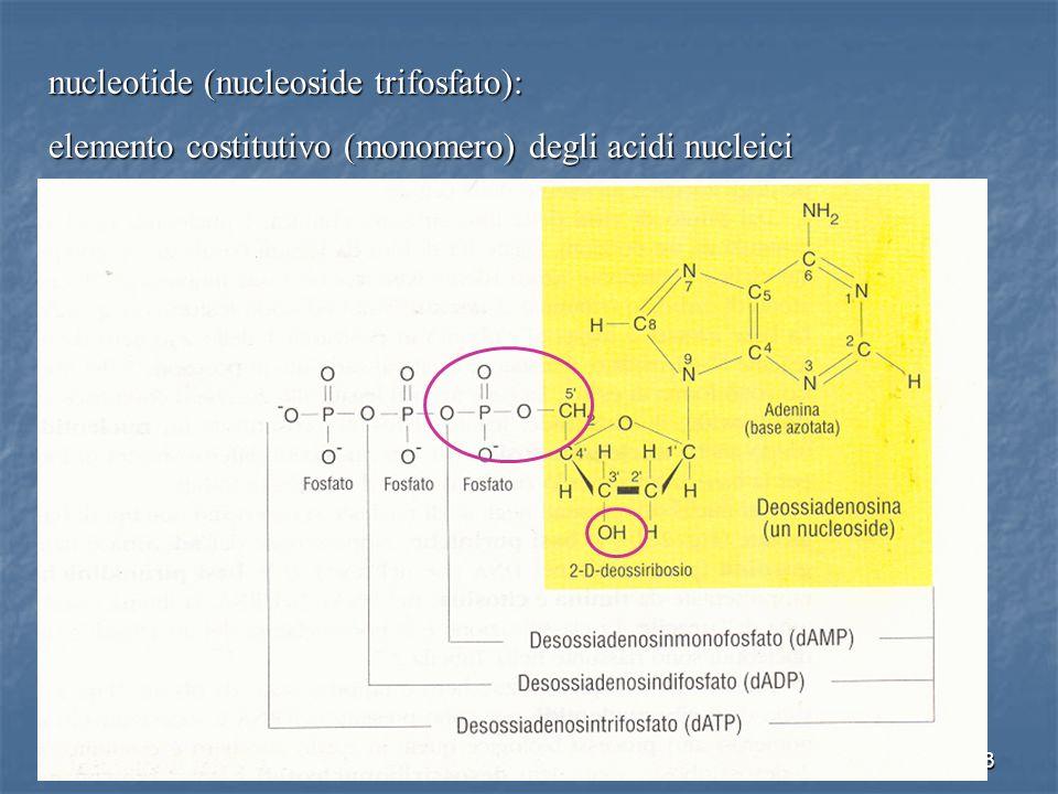 nucleotide (nucleoside trifosfato):
