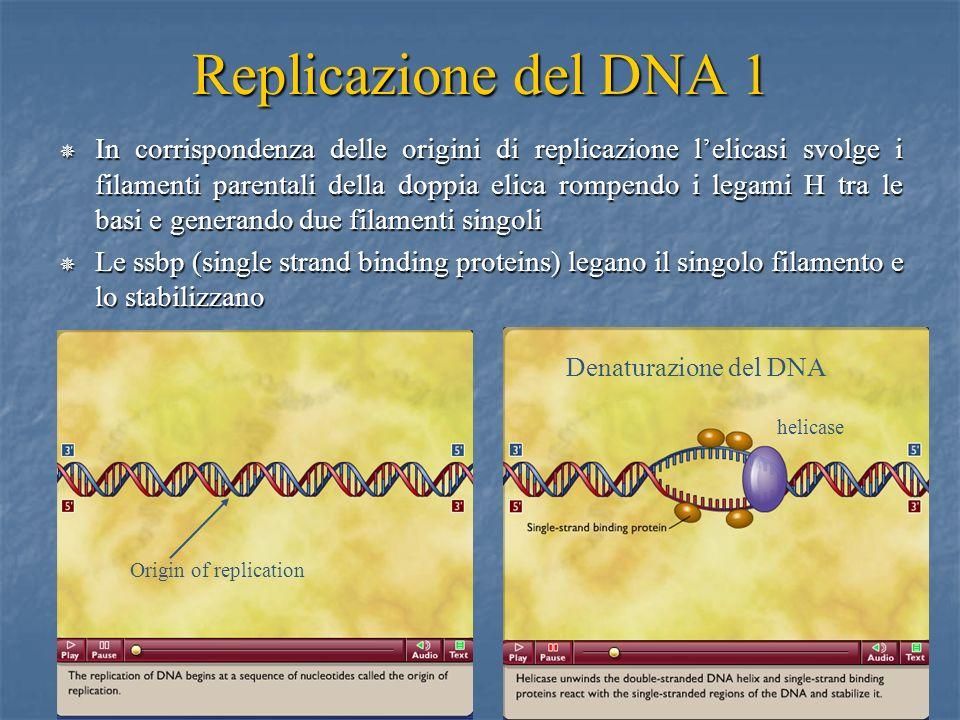 Replicazione del DNA 1