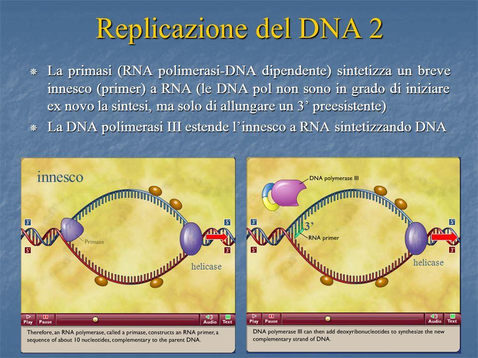 Replicazione del DNA 2 innesco