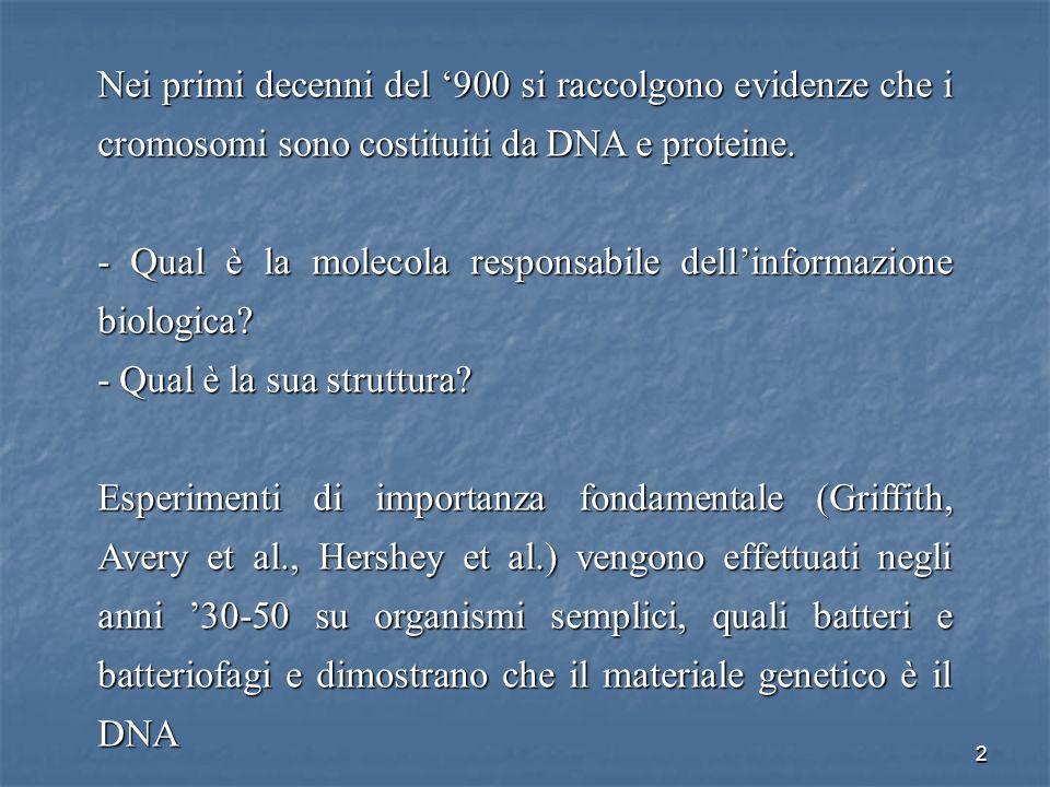 - Qual è la molecola responsabile dell'informazione biologica
