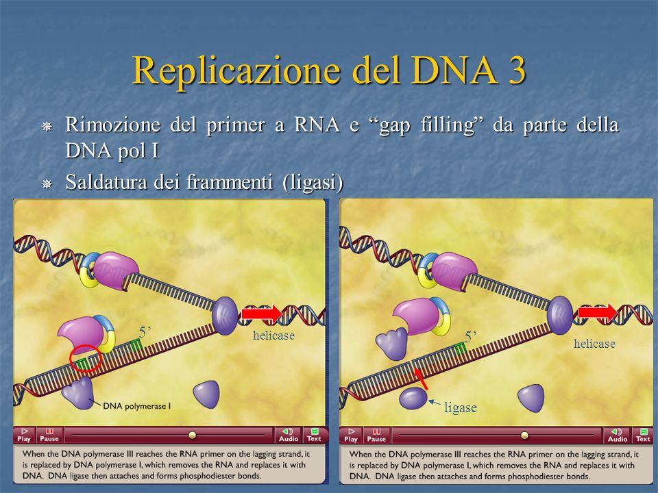 Replicazione del DNA 3 Rimozione del primer a RNA e gap filling da parte della DNA pol I. Saldatura dei frammenti (ligasi)