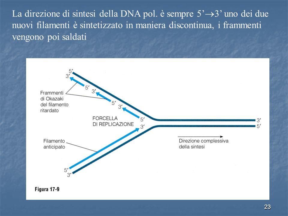 La direzione di sintesi della DNA pol