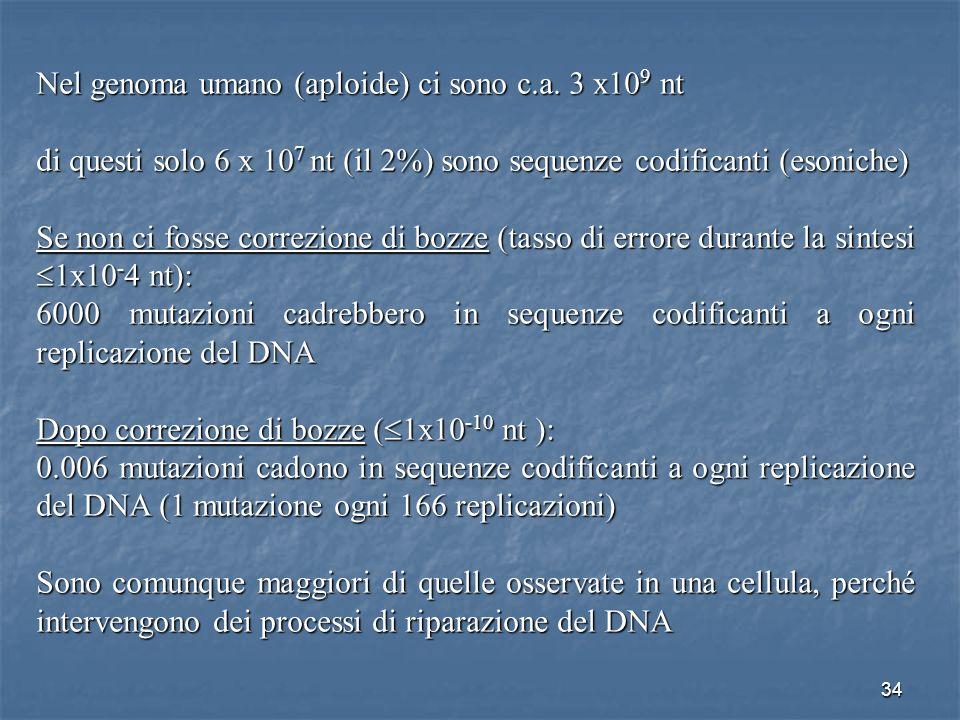 Nel genoma umano (aploide) ci sono c.a. 3 x109 nt