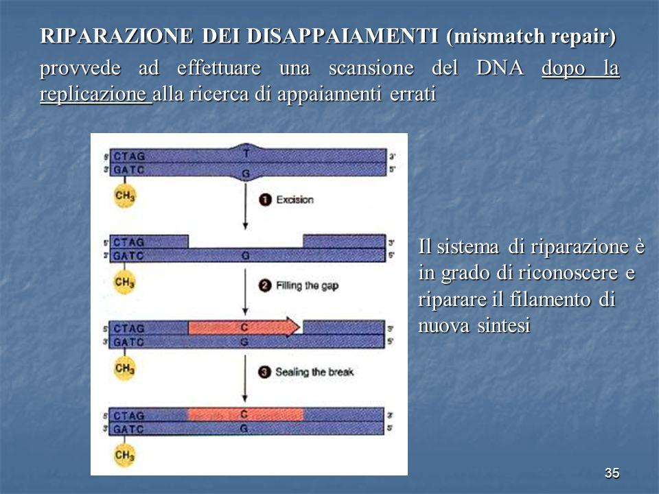 RIPARAZIONE DEI DISAPPAIAMENTI (mismatch repair)