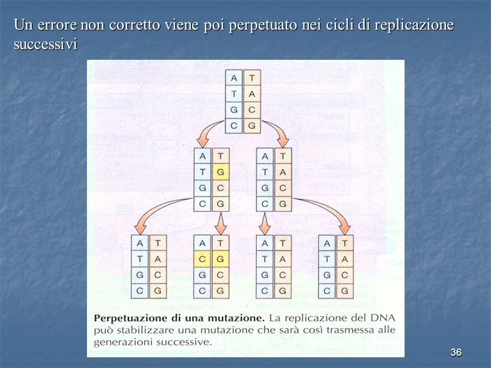 Un errore non corretto viene poi perpetuato nei cicli di replicazione