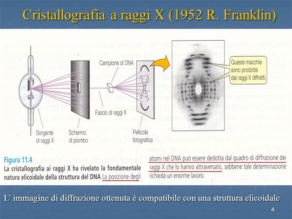 Cristallografia a raggi X (1952 R. Franklin)