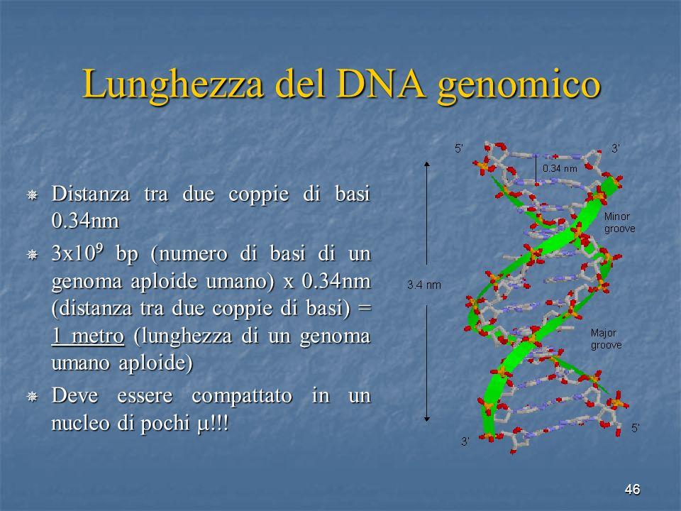 Lunghezza del DNA genomico