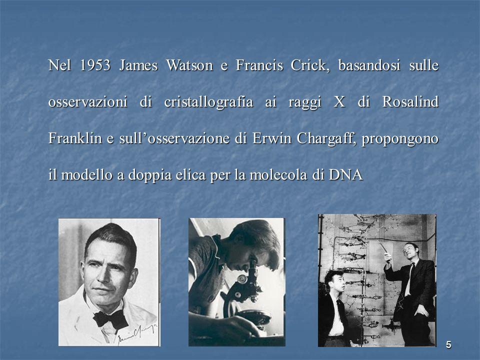 Nel 1953 James Watson e Francis Crick, basandosi sulle osservazioni di cristallografia ai raggi X di Rosalind Franklin e sull'osservazione di Erwin Chargaff, propongono il modello a doppia elica per la molecola di DNA