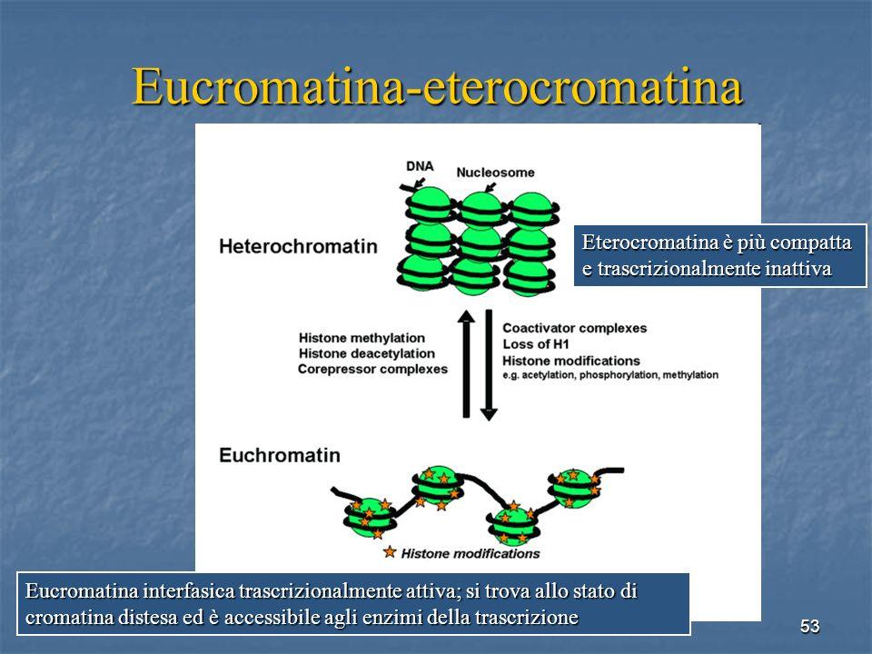 Eucromatina-eterocromatina