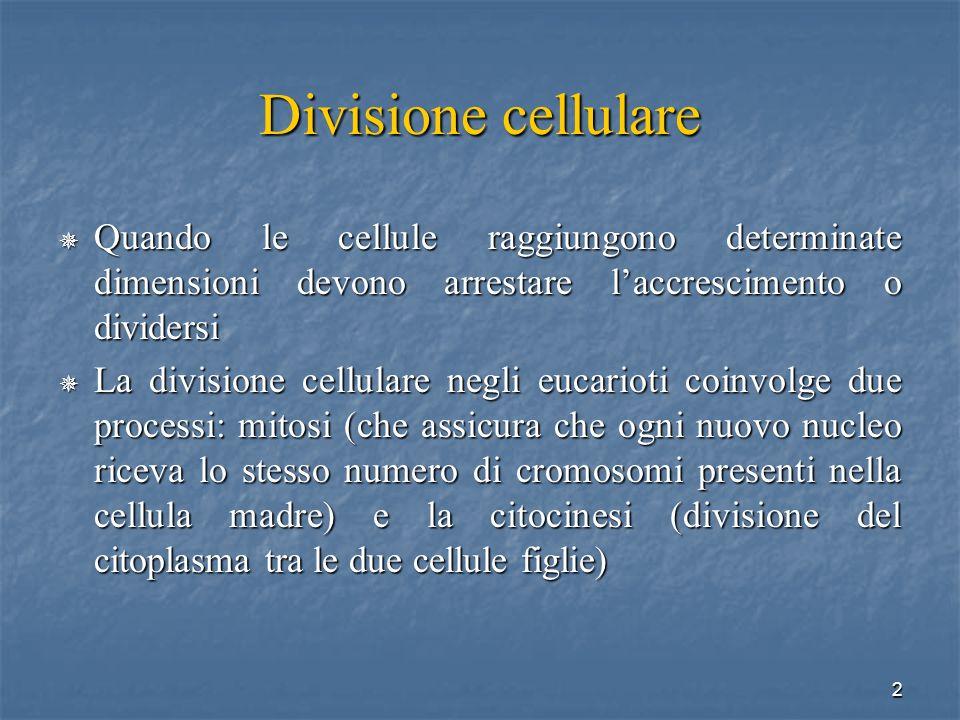 Divisione cellulare Quando le cellule raggiungono determinate dimensioni devono arrestare l'accrescimento o dividersi.