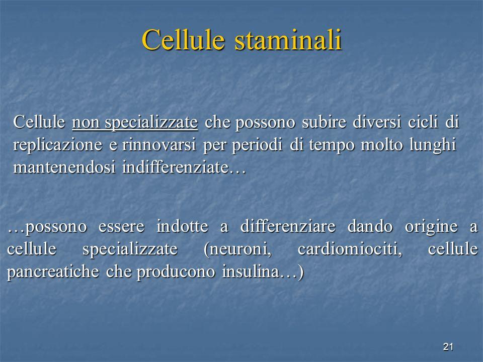 Cellule staminali Cellule non specializzate che possono subire diversi cicli di. replicazione e rinnovarsi per periodi di tempo molto lunghi.