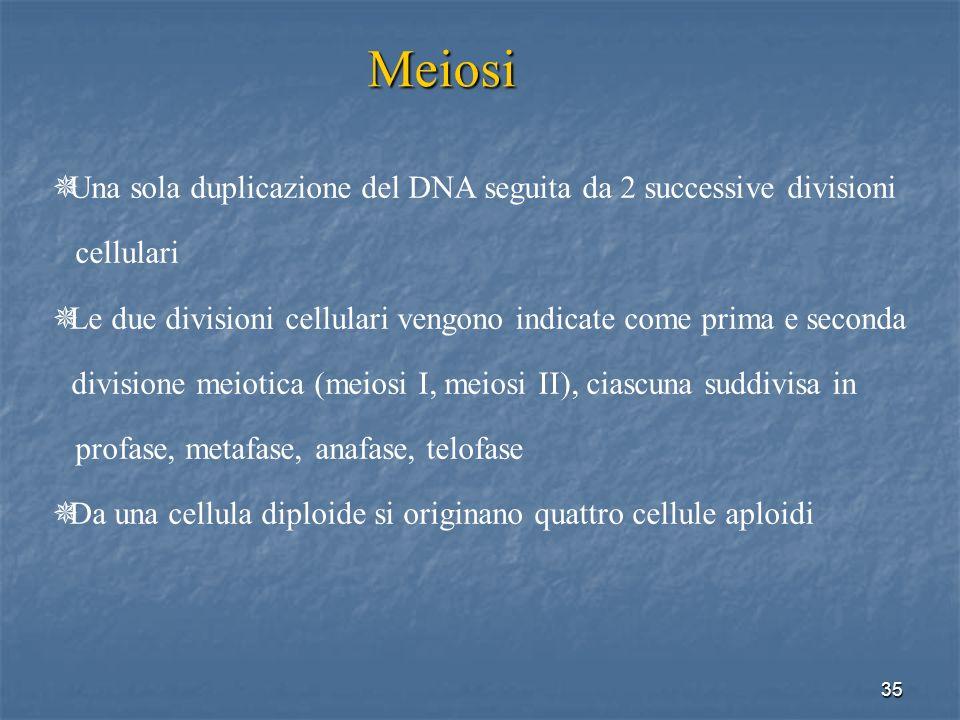 Meiosi Una sola duplicazione del DNA seguita da 2 successive divisioni