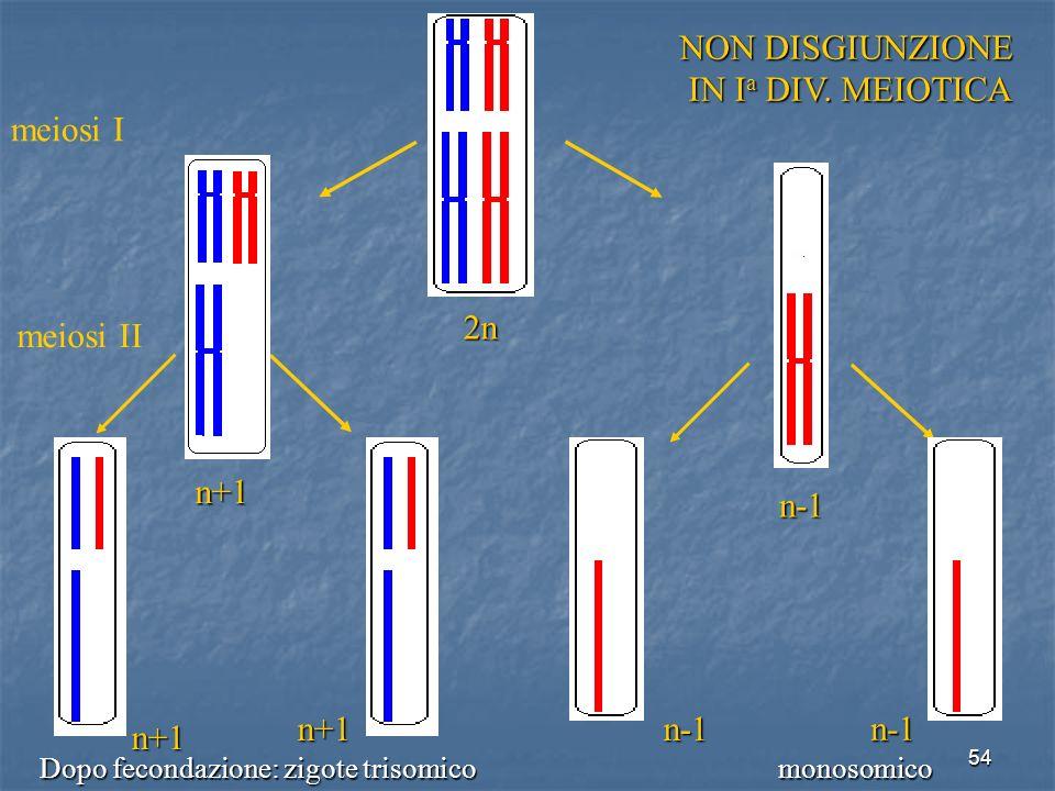 2n NON DISGIUNZIONE IN Ia DIV. MEIOTICA meiosi I n+1 n-1 meiosi II n+1