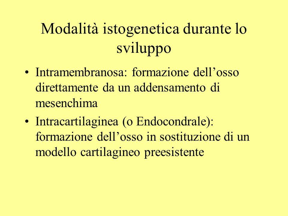 Modalità istogenetica durante lo sviluppo