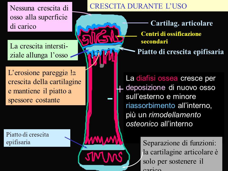 - + CRESCITA DURANTE L'USO