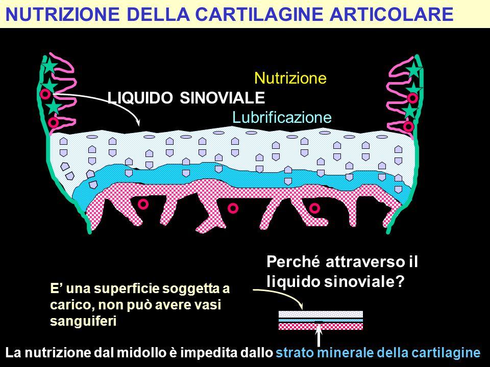 NUTRIZIONE DELLA CARTILAGINE ARTICOLARE