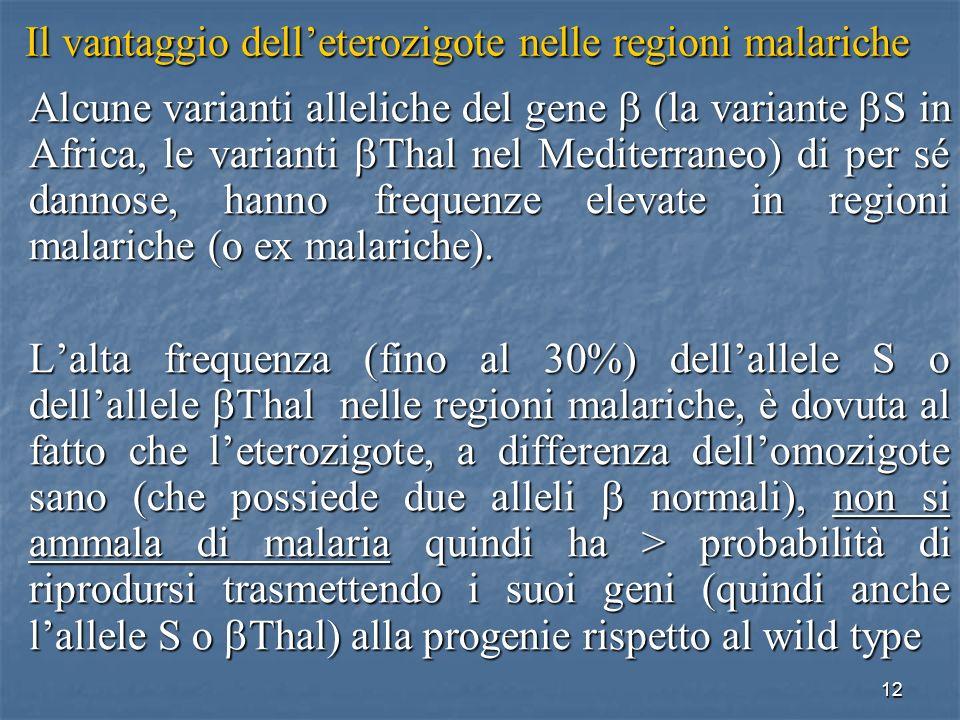 Il vantaggio dell'eterozigote nelle regioni malariche