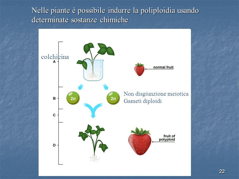 Nelle piante è possibile indurre la poliploidia usando determinate sostanze chimiche