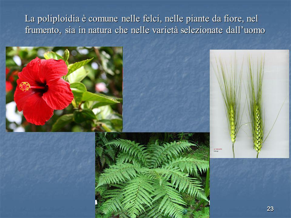 La poliploidia è comune nelle felci, nelle piante da fiore, nel frumento, sia in natura che nelle varietà selezionate dall'uomo
