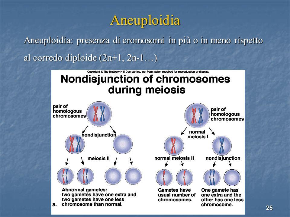 Aneuploidia Aneuploidia: presenza di cromosomi in più o in meno rispetto.