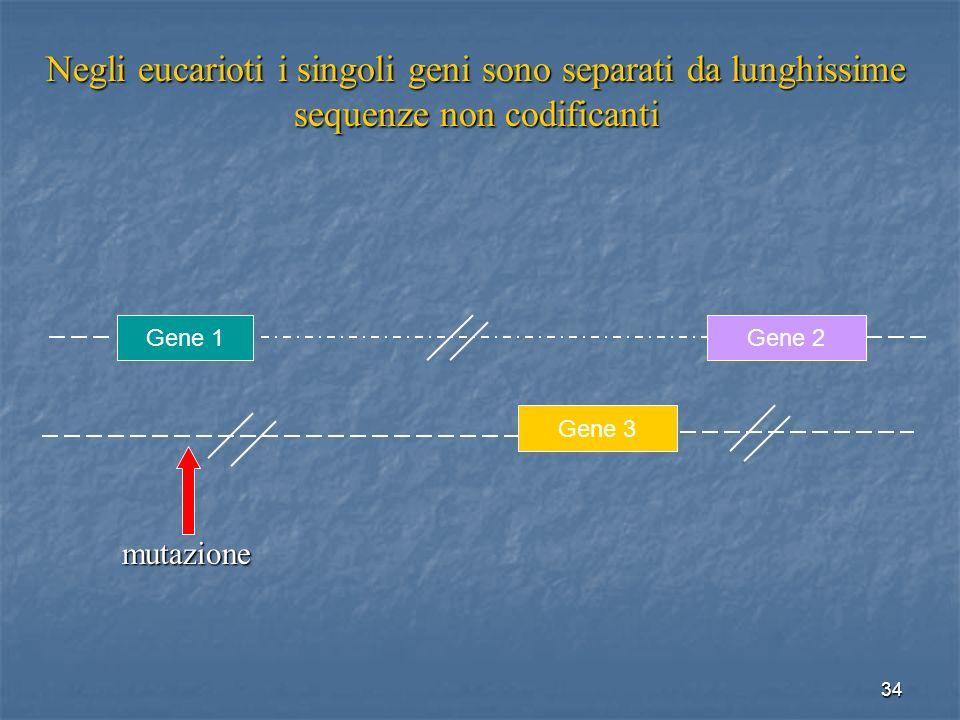 Negli eucarioti i singoli geni sono separati da lunghissime sequenze non codificanti