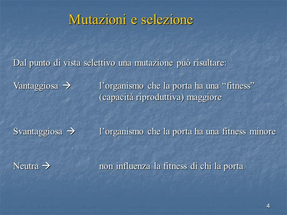 Mutazioni e selezione Dal punto di vista selettivo una mutazione può risultare: