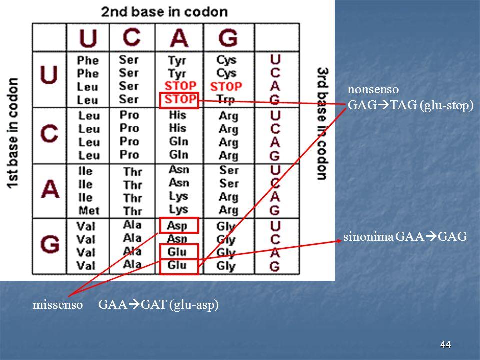 nonsenso GAGTAG (glu-stop) sinonima GAAGAG missenso GAAGAT (glu-asp)