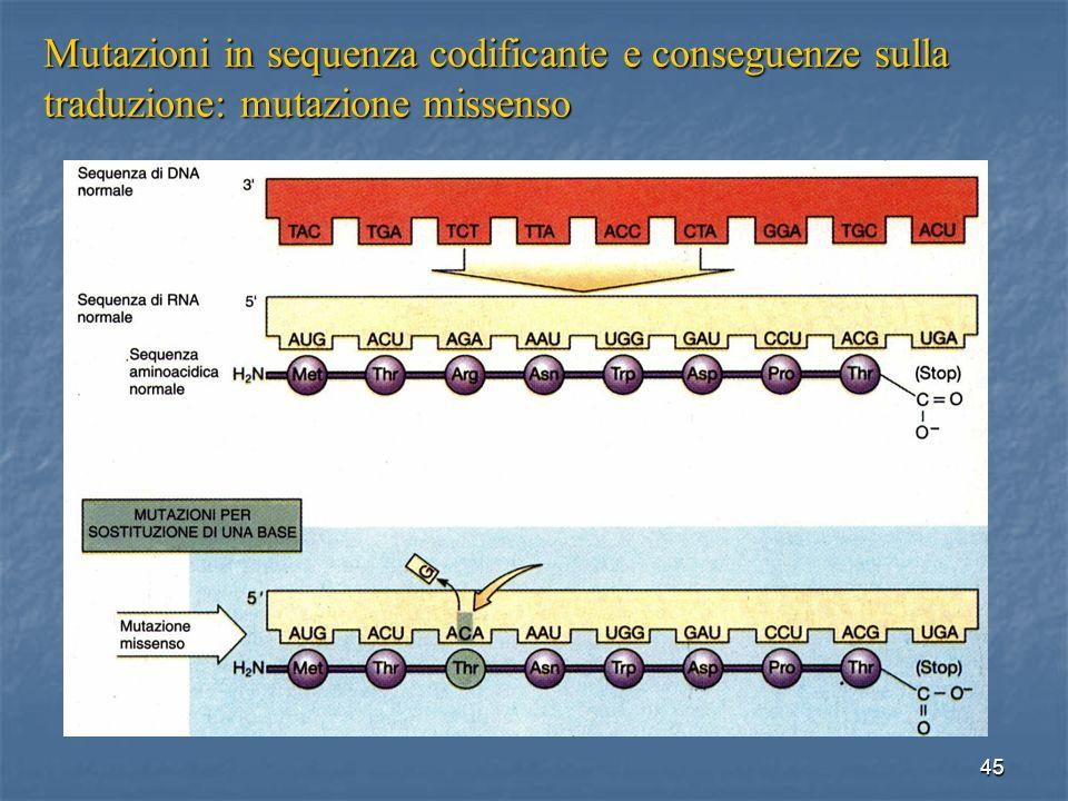 Mutazioni in sequenza codificante e conseguenze sulla traduzione: mutazione missenso
