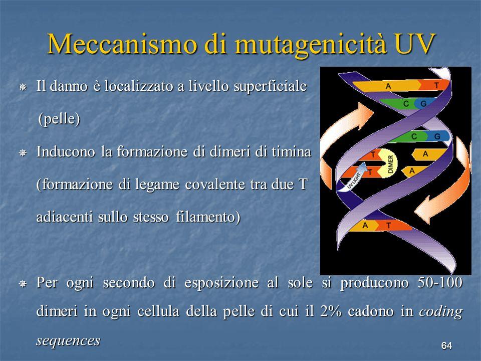 Meccanismo di mutagenicità UV