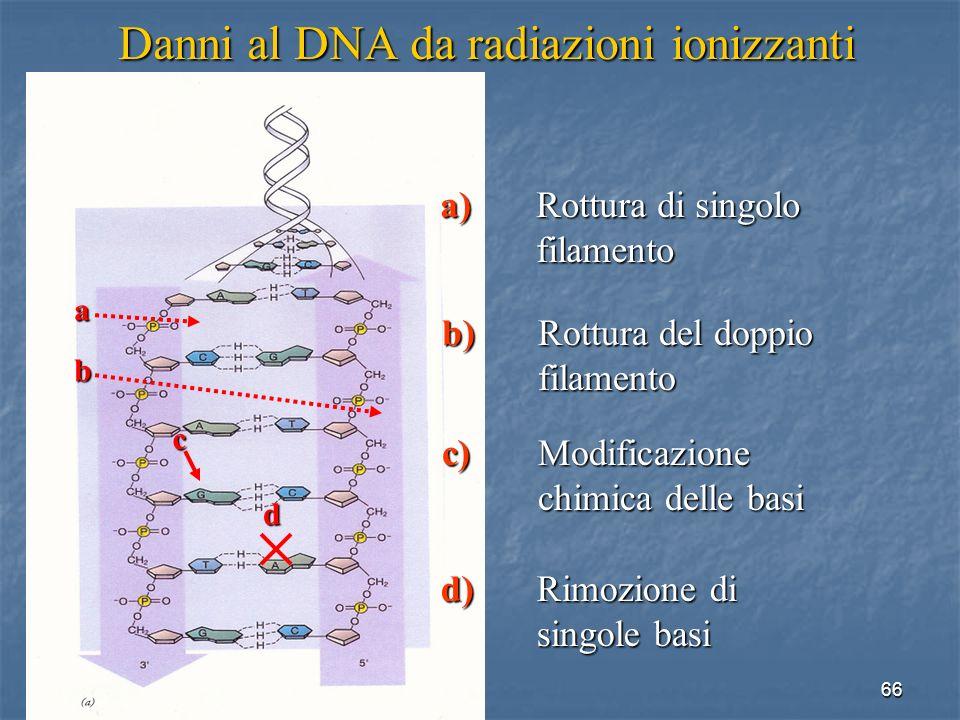 Danni al DNA da radiazioni ionizzanti