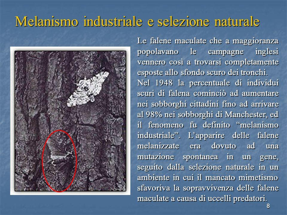 Melanismo industriale e selezione naturale