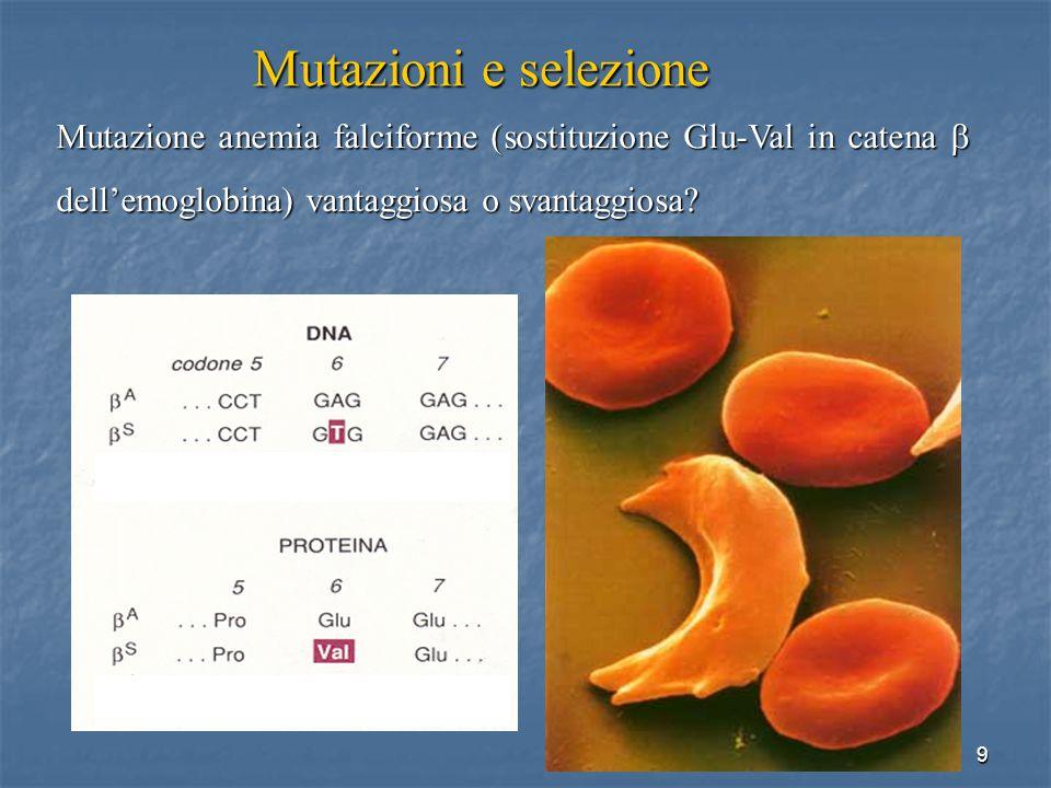 Mutazioni e selezione Mutazione anemia falciforme (sostituzione Glu-Val in catena b dell'emoglobina) vantaggiosa o svantaggiosa