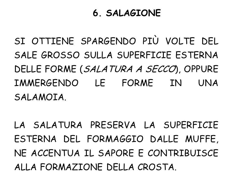 6. SALAGIONE