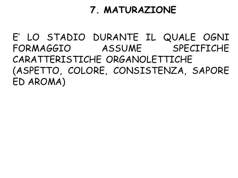 7. MATURAZIONE E' LO STADIO DURANTE IL QUALE OGNI FORMAGGIO ASSUME SPECIFICHE CARATTERISTICHE ORGANOLETTICHE.