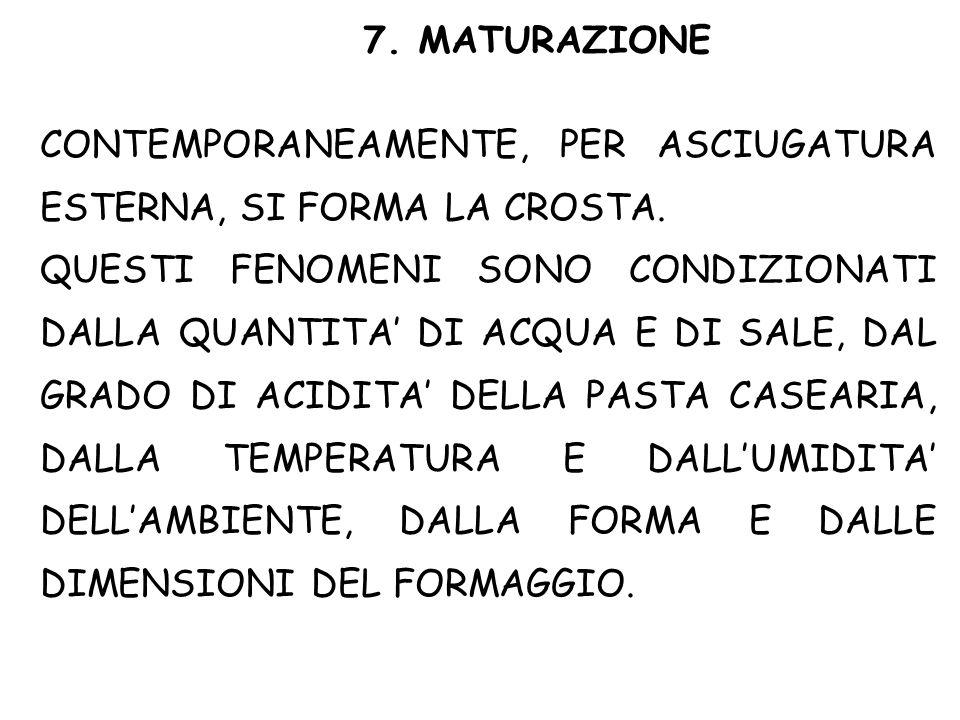 7. MATURAZIONE CONTEMPORANEAMENTE, PER ASCIUGATURA ESTERNA, SI FORMA LA CROSTA.
