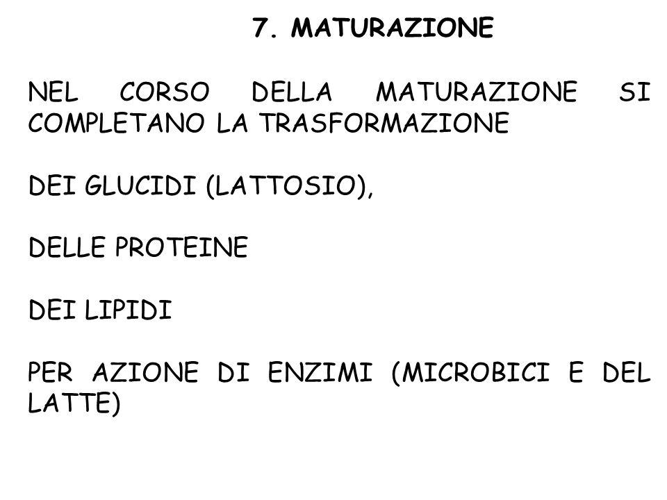 7. MATURAZIONE NEL CORSO DELLA MATURAZIONE SI COMPLETANO LA TRASFORMAZIONE. DEI GLUCIDI (LATTOSIO),