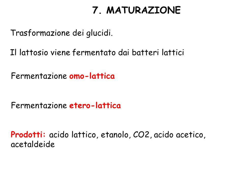 7. MATURAZIONE Trasformazione dei glucidi.