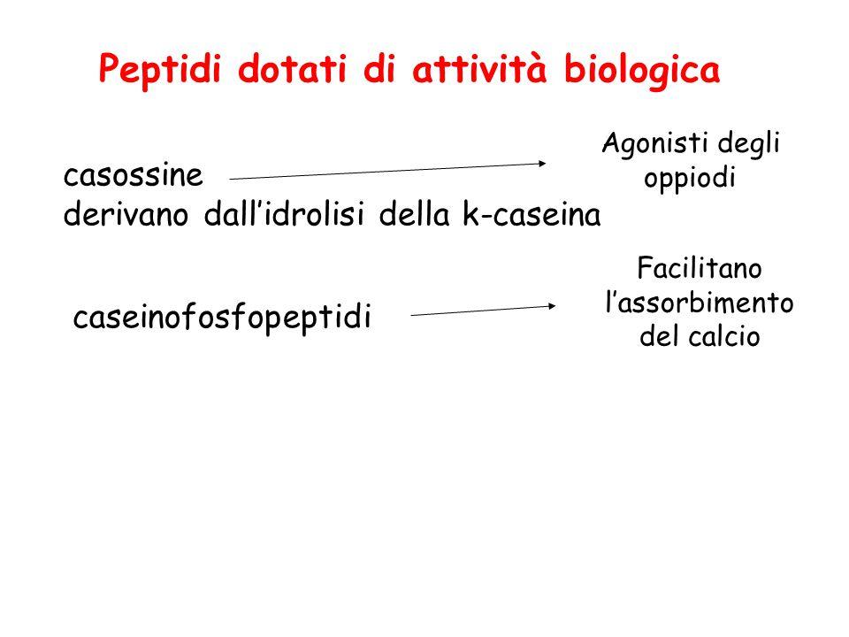 Peptidi dotati di attività biologica