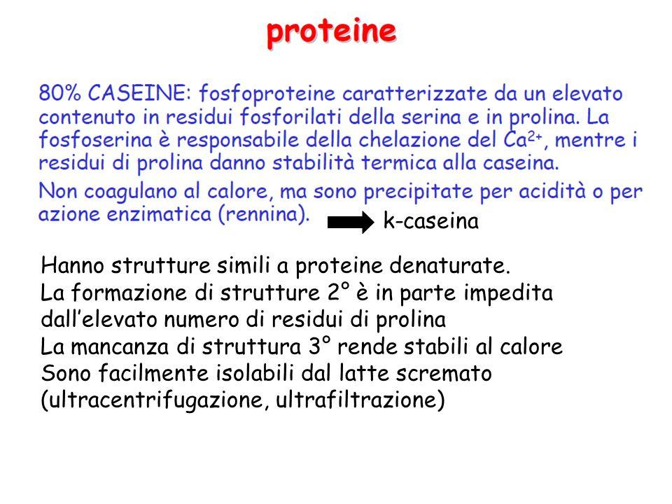 k-caseina Hanno strutture simili a proteine denaturate. La formazione di strutture 2° è in parte impedita dall'elevato numero di residui di prolina.
