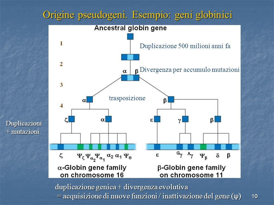 Origine pseudogeni. Esempio: geni globinici