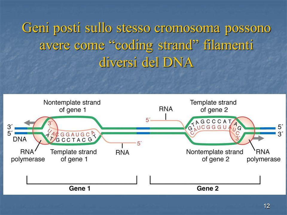 Geni posti sullo stesso cromosoma possono avere come coding strand filamenti diversi del DNA