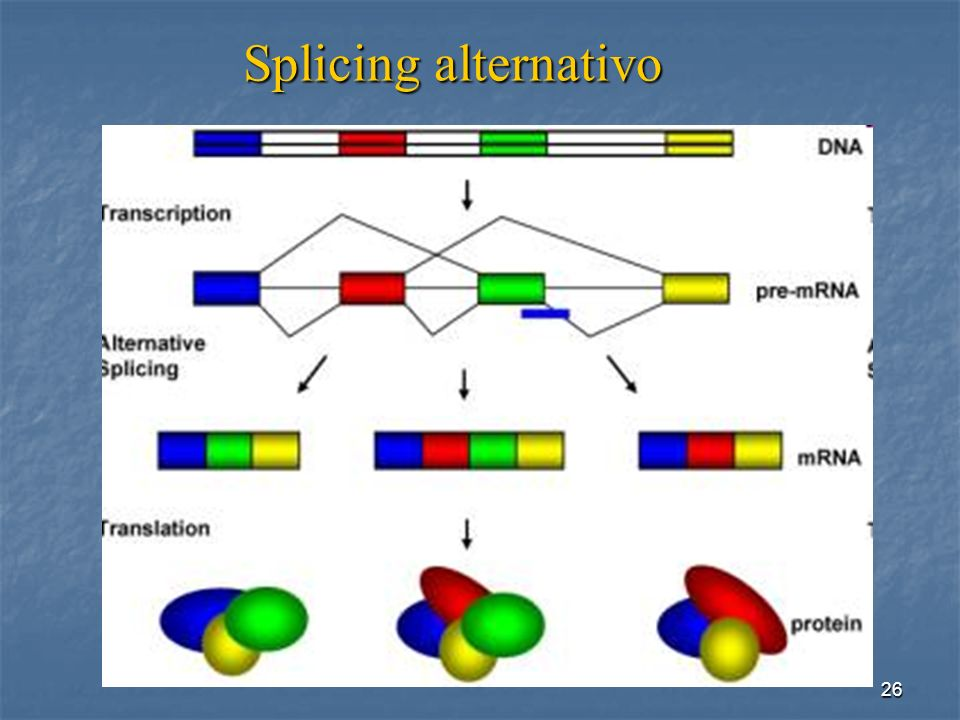Splicing alternativo http://www.ncbi.nlm.nih.gov/pubmed/21311748